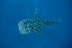 3d在路径的剪报使影子鲨鱼鲸鱼空白 库存照片