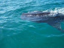 3d在路径的剪报使影子鲨鱼鲸鱼空白 库存图片