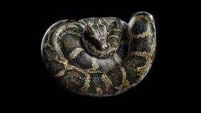 3d大蟒蛇 向量例证