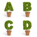 3D字体盆栽植物 免版税库存照片