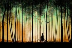 3D日出的有雾的深绿色森林 免版税库存照片