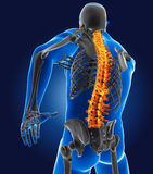3D有骨骼的医生 免版税库存照片