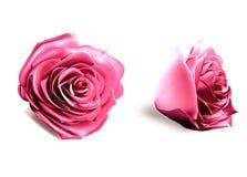 3d桃红色玫瑰 图库摄影
