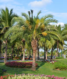 3d横向本质棕榈树 库存图片
