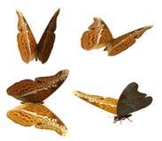 3D海军上将Butterfly 免版税库存照片