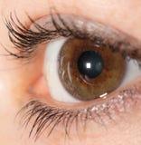 20d照相机eos眼睛人力宏观射击 库存图片