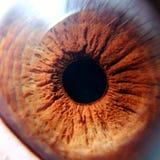 20d照相机eos眼睛人力宏观射击 免版税库存照片