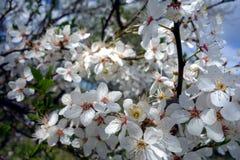 3d美丽的开花的图象结构树 免版税库存照片
