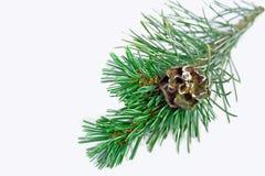 3d美好的圣诞节尺寸形象例证杉木三非常 库存照片