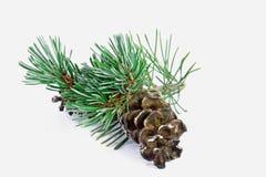 3d美好的圣诞节尺寸形象例证杉木三非常 免版税库存图片