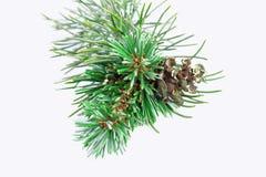 3d美好的圣诞节尺寸形象例证杉木三非常 库存图片