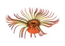 3D翻译在白色的海葵 库存例证