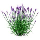 3D翻译在白色的淡紫色花 免版税库存照片