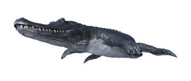 3D翻译在白色的鳄鱼凯门鳄 向量例证