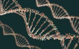3d脱氧核糖核酸例证回报结构 免版税图库摄影