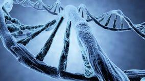 3d脱氧核糖核酸genered图象子线 库存图片