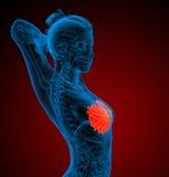 3d übertragen medizinische Illustration der menschlichen Brust stock abbildung