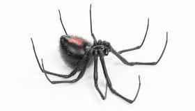 3D übertragen von der schwarze Witwen-Spinne Stockfoto