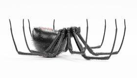 3D übertragen von der schwarze Witwen-Spinne Stockbild
