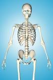3d übertrug Illustration eines männlichen Skeletts Lizenzfreies Stockbild
