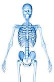 3d übertrug Illustration eines männlichen Skeletts Lizenzfreies Stockfoto