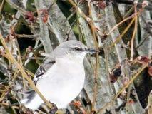 3d ścinku mockingbird północny nad ścieżki renderingu cienia biel zdjęcie stock