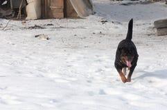 3d ścinku pies nad ścieżki renderingu rottweiler cienia biel Fotografia Stock