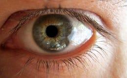 20d ανθρώπινη μακρο βλάστηση ματιών φωτογραφικών μηχανών eos Στοκ Φωτογραφίες