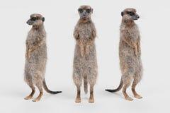 3D представляют Meerkat Стоковая Фотография RF