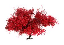 3D представляя дерево Momiji на белизне стоковое изображение
