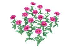 3D представляя розовые цветки Gerbera на белизне стоковые фотографии rf