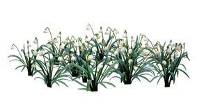 3D представляя цветки Snowdrop на белизне стоковые изображения rf