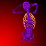 3d представляют медицинскую иллюстрацию ribcage Стоковая Фотография