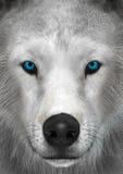3D представляя ледовитого волка Стоковые Фото