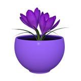 3D представляя фиолетовый крокус на белизне бесплатная иллюстрация
