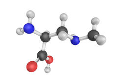 3d结构beta methylamino L胺基代丙酸,非proteinogenic 库存图片