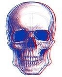 3d头骨 库存图片
