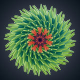3d abstract organic flower cactus star shape. 3d abstract organic shape, virus macro, cybernetic flower or star Stock Photo