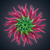 3d abstract organic flower cactus star shape Stock Photos