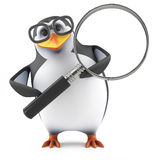 3d Academic penguin looks through a magnifying glass. 3d render of a penguin holding a magnifying glass Royalty Free Stock Photos