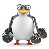 3d Acedemic penguin lifting weights. 3d render of a penguin lifting weights Royalty Free Stock Photography