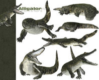 3D alligator graphics. 3D alligator in motion graphics on white background stock image