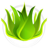 3d Aloe Vera Plant Royalty Free Stock Photos