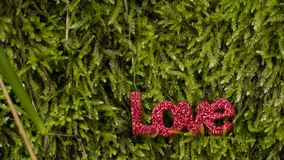 ` d'AMOUR de ` de mot de lettres sur la mousse dans la forêt Photos libres de droits