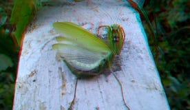 3D, anáglifo Mantis religiosa, insecto despredador fotos de archivo