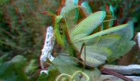 3D, anáglifo Mantis religiosa, insecto despredador imágenes de archivo libres de regalías