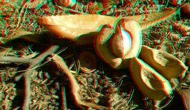 3D anaglyph hickory nuts. Nice autumn background. Yellow hickory leaves. 3D anaglyph, hickory nuts. Autumn background. Traditional england food. Traditional stock images