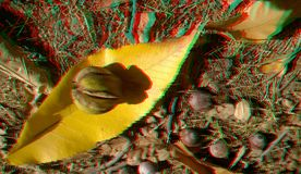 3D anaglyph hickory nuts. Nice autumn background. Yellow hickory leaves. 3D anaglyph, hickory nuts. Autumn background. Traditional england food. Traditional stock photos