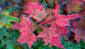 3D anaglyph. Red maple leaves royalty free stock photos