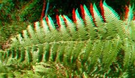 3D, anaglyphe Polypodiidae, a généralement appelé les fougères leptosporangiate images stock